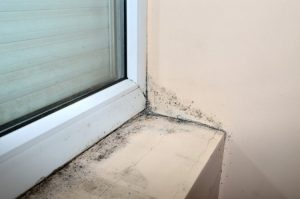 How Professionals Remove Mold From Different Surfaces
