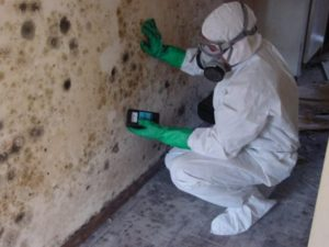 Myths About Mold Project X Restoration Denver