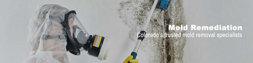 mold remediation removal Denver